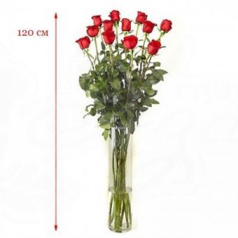 Роза 110-120 см