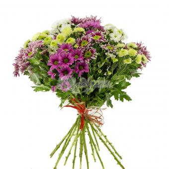 Букет из 17 разноцветных кустовых хризантем